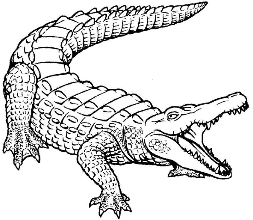 cocodrilos para colorear 10
