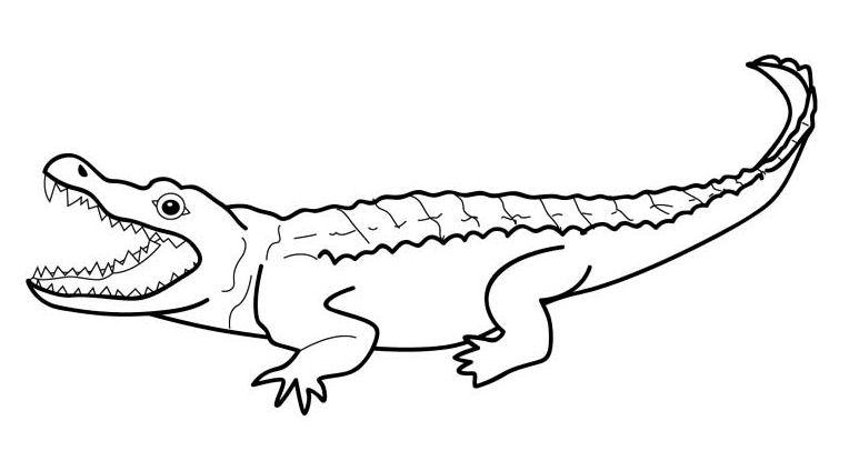 cocodrilos para colorear 3