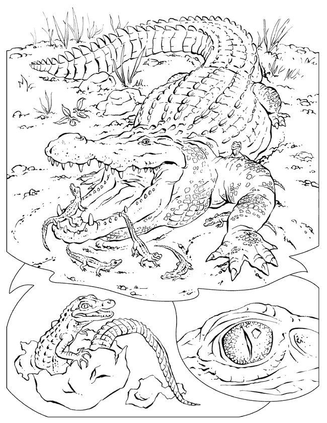 cocodrilos para colorear 7