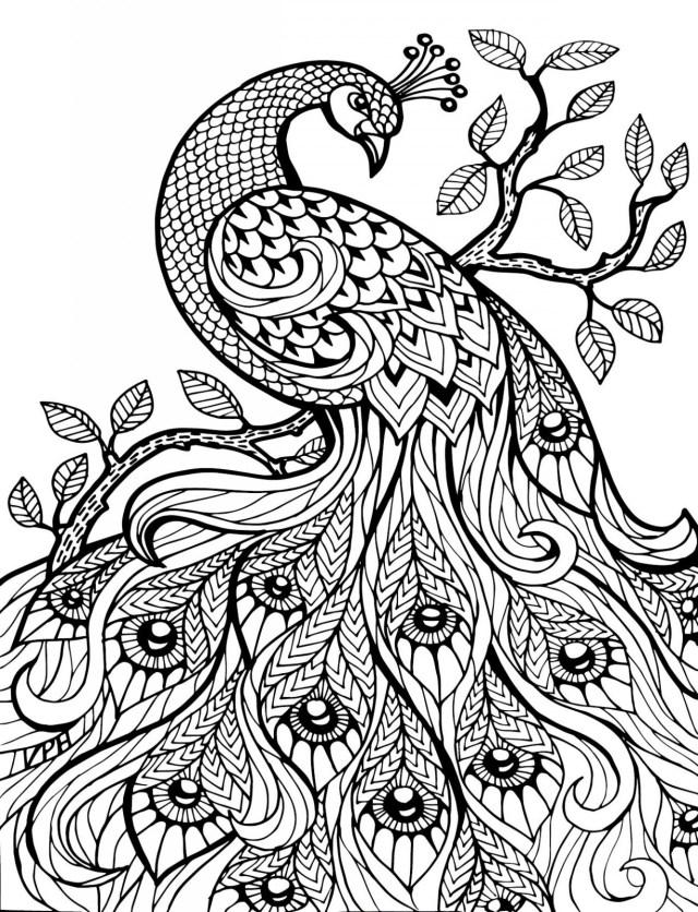 dibujos para colorear dificiles 25 pavo real