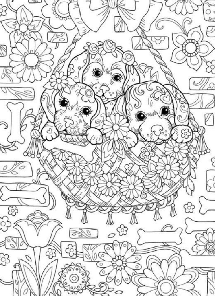 dibujos para colorear dificiles 4 perritos en cesta