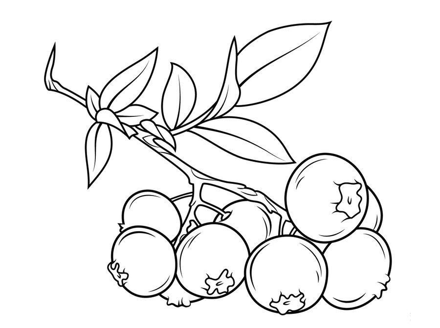 frutas para colorear 12 arandanos