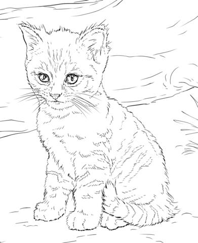 gatos para colorear 1