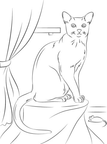 gatos para colorear 4