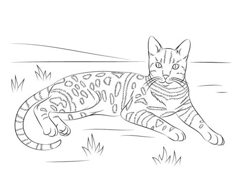 gatos para colorear 7
