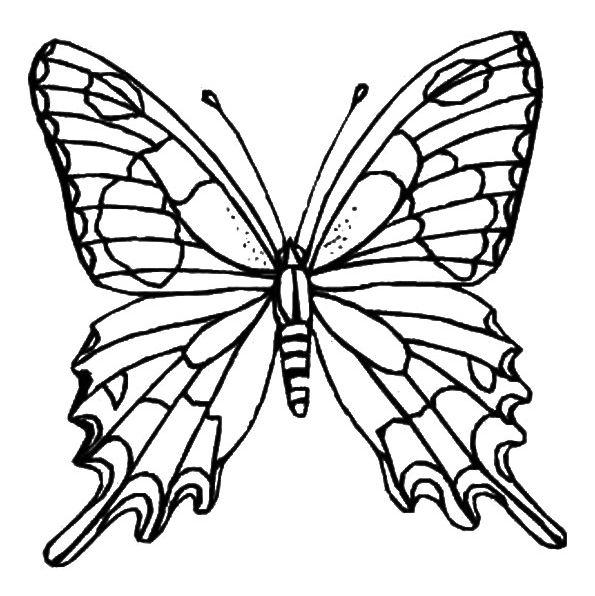 mariposas para colorear 9