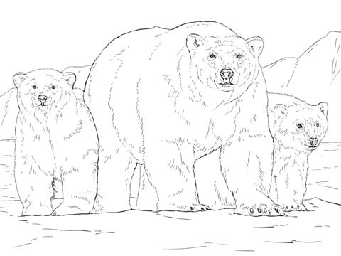 oso para colorear 1 oso polar con oseznos