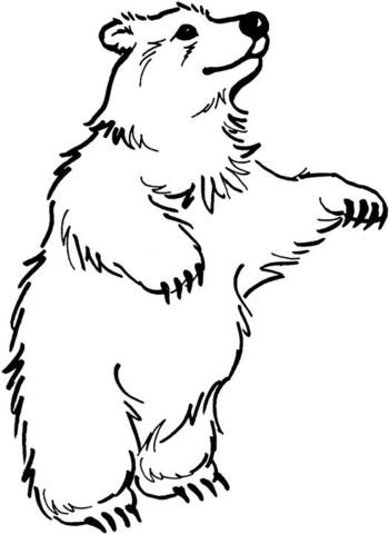 oso para colorear 11 oso pardo