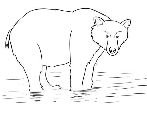 oso para colorear 12 oso pardo