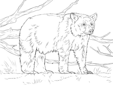 oso para colorear 13