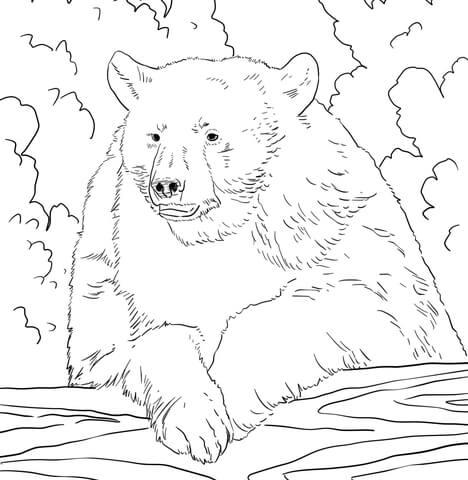 oso para colorear 14