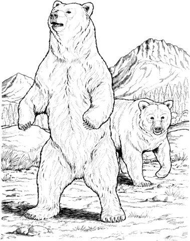 oso para colorear 15 osos