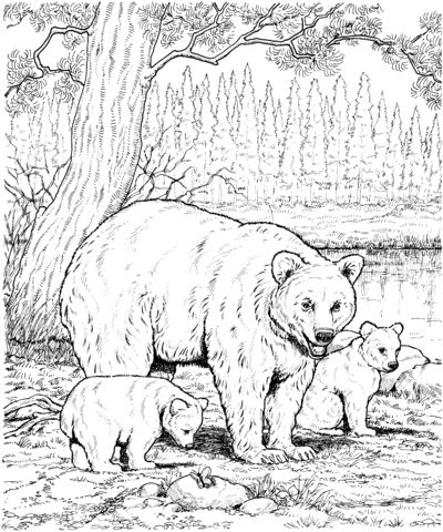 oso para colorear 16 oso y oseznos