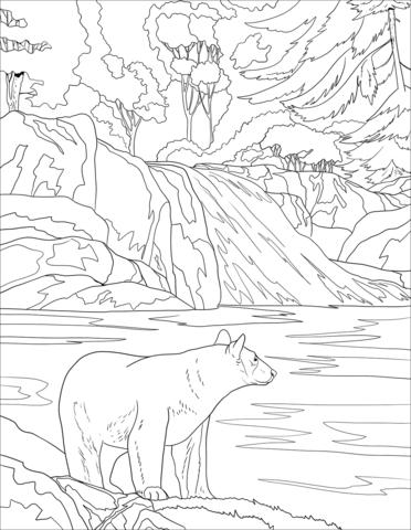 oso para colorear 17 oso a la orilla del rio