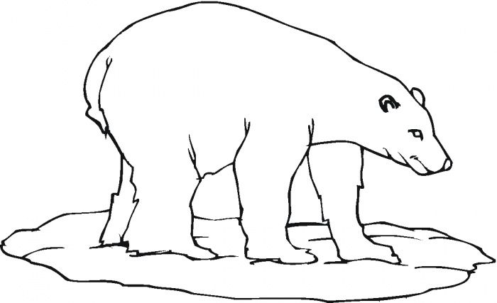 oso para colorear 18
