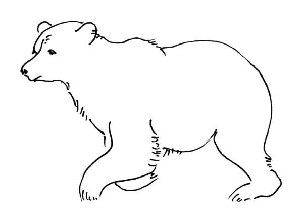 oso para colorear 19