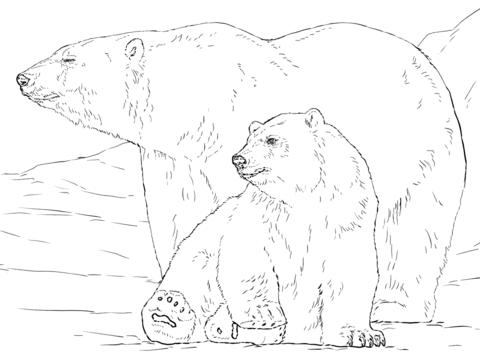 oso para colorear 2 oso polar con osezno