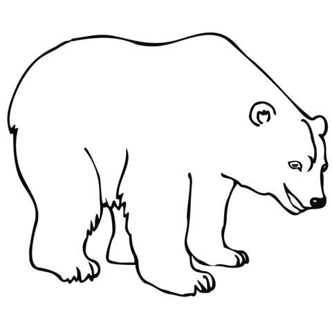oso para colorear 20
