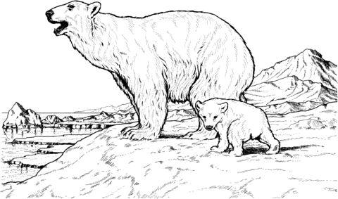 oso para colorear 4 oso polar y osezno