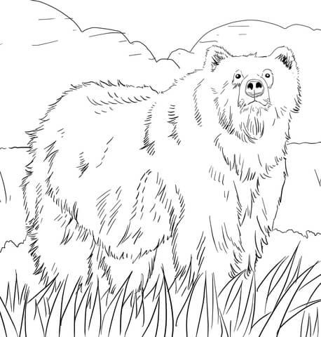 oso para colorear 7 oso pardo