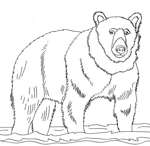 oso para colorear 8 oso pardo