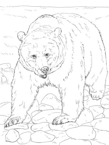 oso para colorear 9 oso pardo