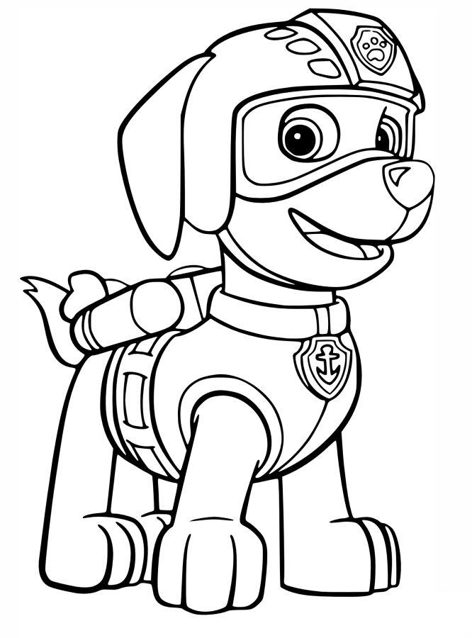patrulla canina para colorear 1 zuma con uniforme